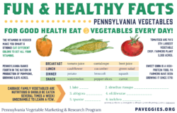 Fun & Healthy Facts Side 2