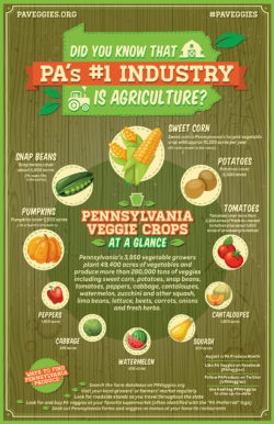 PA-Veggie-Crops-at-a-Glance