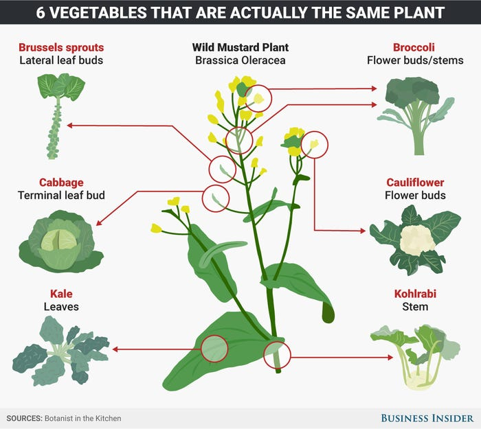 Brassica Oleracea: 6 Vegetables That are the Same Plant