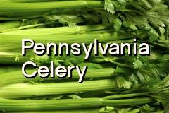 pa_celery