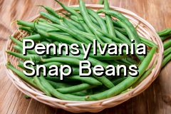 pa_snap_beans