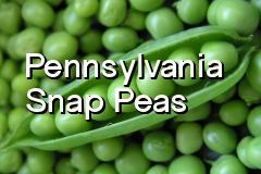 pa_snap_peas