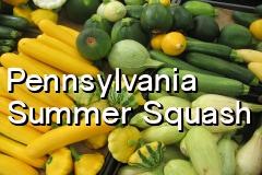 pa_summer_squash