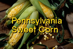 pa_sweet_corn_2