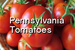 pa_tomatoes