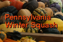 pa_winter_squash